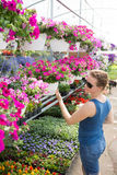 Trendy woman selecting nursery plants Stock Images