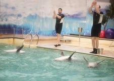 Trenery jego delfiny flippers i ręki, witają widowni Obrazy Royalty Free