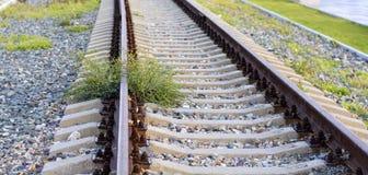 Trenes de detención arrogantes de Bush Foto de archivo libre de regalías