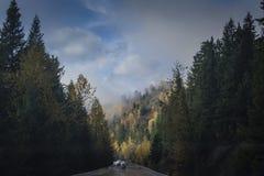Treno in corridoio degli alberi variopinti di autunno Fotografia Stock