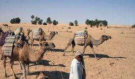 Treno del cammello fotografia stock libera da diritti
