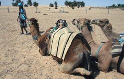 Treno 2 del cammello Immagine Stock Libera da Diritti