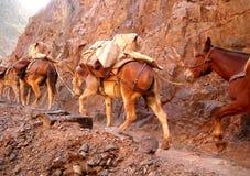 Treno del mulo immagine stock