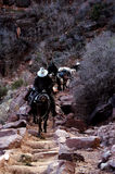 Treno di pacchetto, muli, grande canyon Fotografie Stock Libere da Diritti