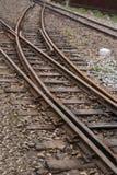 Treno ferroviario del calibro stretto della foresta di Alishan Fotografie Stock Libere da Diritti