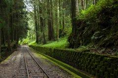 Treno ferroviario del calibro stretto della foresta di Alishan Fotografia Stock