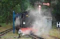 Treno ferroviario del vapore del calibro stretto Fotografia Stock Libera da Diritti