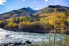 Treno Tressel lungo il fiume nell'Alaska fotografia stock libera da diritti