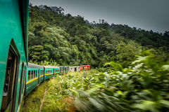 Treno tropicale Fotografie Stock