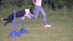 Trenować psa skakać nad barierami z pomocą kobieta tresera, stażowy słoneczny dzień Zwolnione tempo strzelanina zbiory wideo
