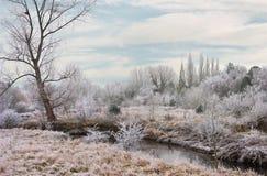 trent vinter för flod Royaltyfria Foton