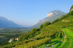 Trentino. Landscape in Italy, vineyards stock photo