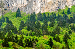 Trentino Alto Adige, Alps detail Royalty Free Stock Image