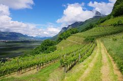 Trentino Royalty Free Stock Photos