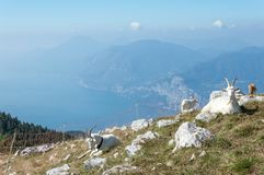 Trentino för naturlig miljö land arkivbilder