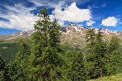Trentino - high Pejo valley Stock Photo