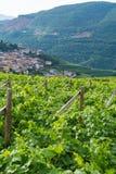 Trentino vineyards, Italy Stock Images