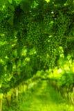Trentino vineyards, Italy Stock Photography