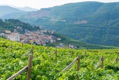 Trentino vineyards, Italy Royalty Free Stock Photos