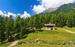 Trentino - wysoka Pejo dolina Fotografia Royalty Free