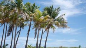 Trenza de la palma en el viento almacen de metraje de vídeo