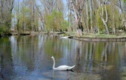 Trenza y plantas acuáticas en el banco de un lago en primavera foto de archivo libre de regalías