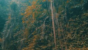Trepadeiras e plantas tropicais na selva da floresta tropical video estoque
