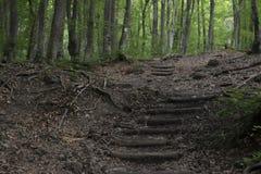 Treppe auf der Spur im Wald lizenzfreies stockfoto