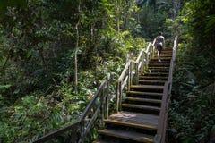 Treppe, die bei Macritchie klettert lizenzfreies stockfoto