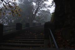 Treppe, die in den Fallnebelmorgen steigt stockfotos