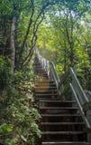Treppe, die im Wald geht Lizenzfreies Stockbild