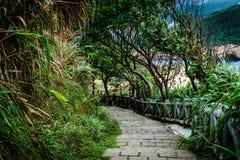 Treppe durch den Dschungel Lizenzfreies Stockbild