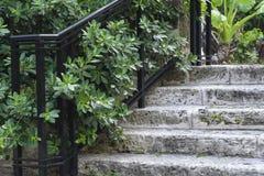 Treppe hergestellt von der Koralle Stockfotos