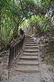 Treppe im Dschungel Lizenzfreie Stockbilder
