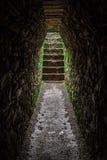 Treppe im Dschungel Lizenzfreies Stockfoto