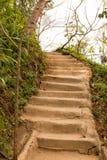 Treppe im Dschungel Lizenzfreie Stockfotos