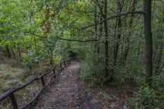 Treppe im Herbstwald Stockfotos