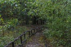 Treppe im Herbstwald Stockbild
