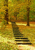 Treppe im Park mit goldenen Blättern Lizenzfreie Stockfotografie