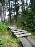 Treppe im Wald Stockfoto