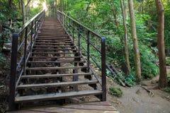 Treppe im Wald Lizenzfreies Stockbild
