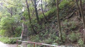 Treppe im Wald Lizenzfreie Stockfotografie