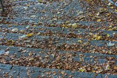Treppe im Wald mit braunem und gelbem Herbstblatt Stockbild