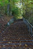 Treppe im Wald mit braunem und gelbem Herbstblatt Stockbilder