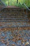 Treppe im Wald mit braunem und gelbem Herbstblatt Lizenzfreie Stockbilder