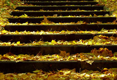Treppe mit goldenen Blättern Stockfotos