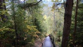 Treppe mitten in einem Wald Stockbild