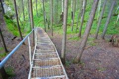 Treppe unten zum Sommerwald Stockbilder