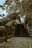 Treppe zum Herbst, kalter Nachmittag stockbilder