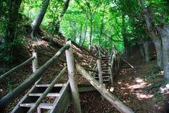 Treppe zum Wald Stockbild